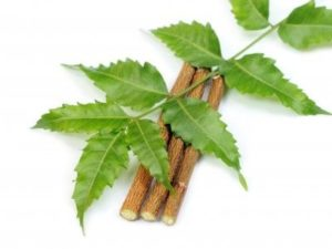 Neem or Azadirachta Indica for herpes