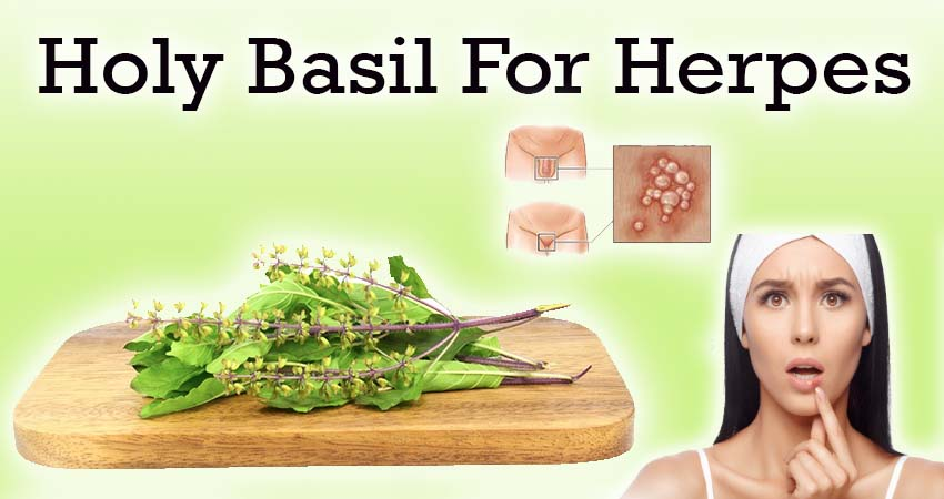 Holy basil a potential cure for herpes- Holy Basil For Herpes