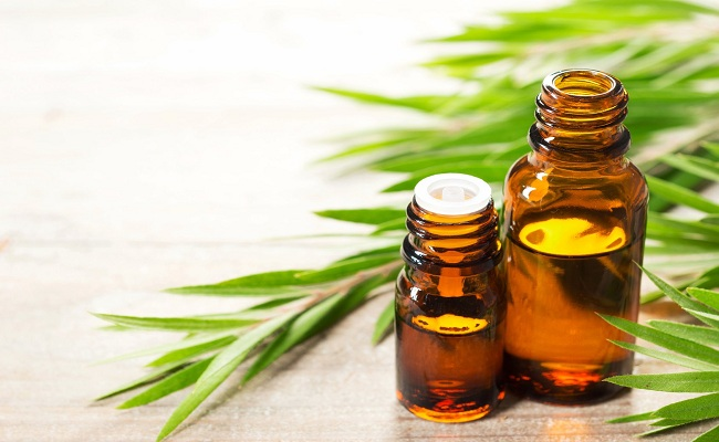 tea-tree-essential-oil-for-herpes